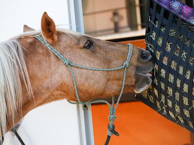 Horse Show 2016 - Lane Lewis