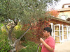 Mariyam and the olive tree