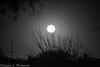 20161114 Super Moon D4S 0002