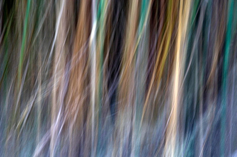 Grass tree slow shutter