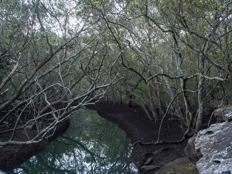 Buffalo Ck Reserve
