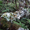 Lichens! [photo by Irene Newhouse]