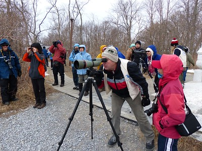 Several spotting scopes were set up for park visitors to see the waterfowl.