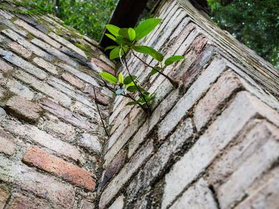 Fig on a brick
