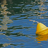 Yellow Buoy