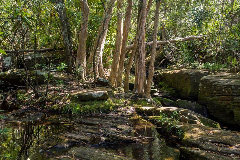 Creek near Kelly's Falls