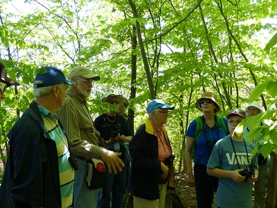 Dennis Barry talking about the American Beech tree.