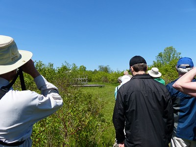 WBFN members viewing Tree Swallows at their nesting box.