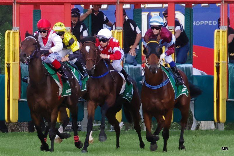 Wyong Races Start