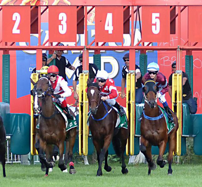 Wyong Races 6