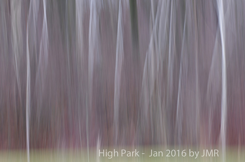 Jan 16- 2016 High Park 052 copy1000