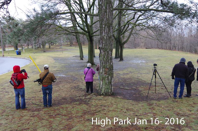 Jan 16- 2016 High Park 012 copy1000