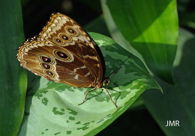 Feb 7- 2016 Cambridge Butterfly Con 120 copy1000