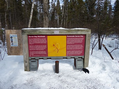 Spruce Bog Boardwalk interpretive sign - WBFN members walked this trail and observed wildlife