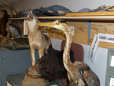 Mammals and Birds collection