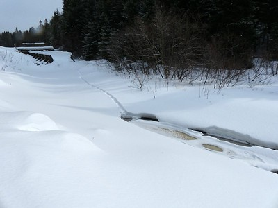 Northern River Otter - tracks and slide