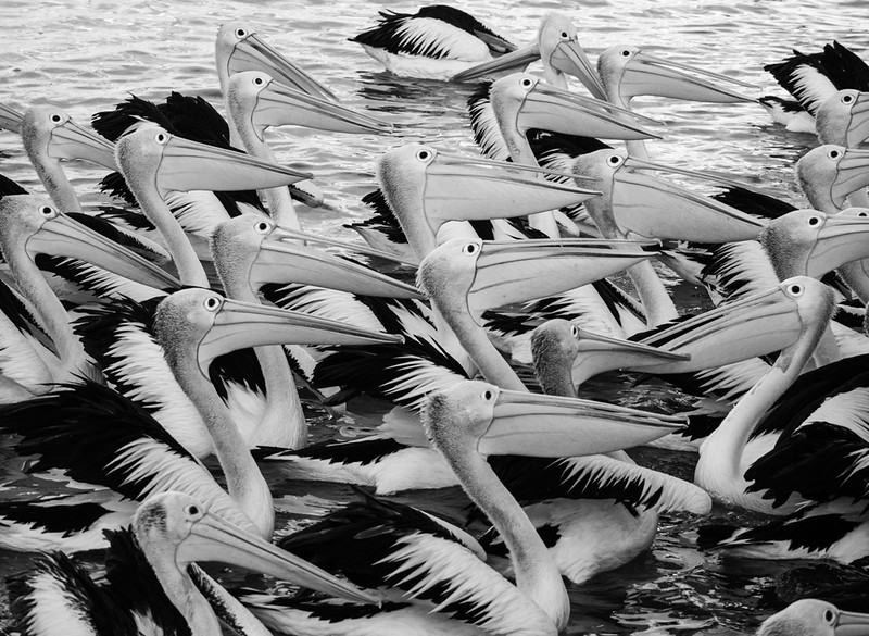 Pelican patterns