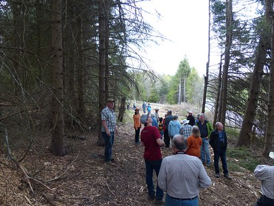 Trail along stand of White Spruce tree