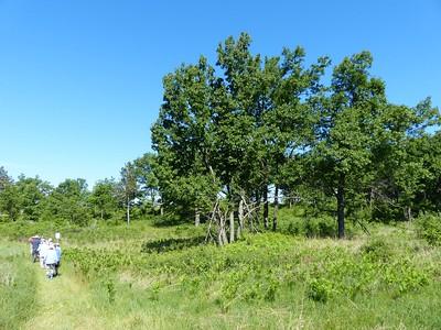 WBFN members walking the trail near a cluster of Black Oaks