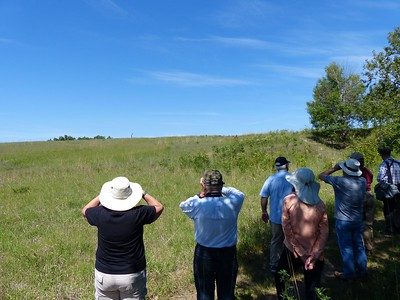 WBFN members looking for Bluebirds