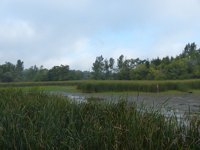 Pond and marsh as viewed from observation deck