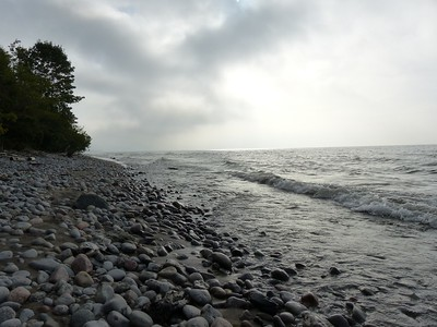 Lake Ontario showing bird and fish carcass