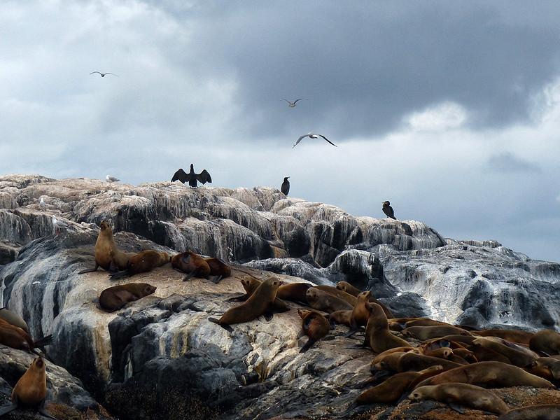 Seals Montague Island
