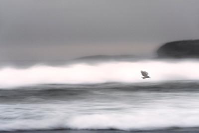 Black Bird Passing