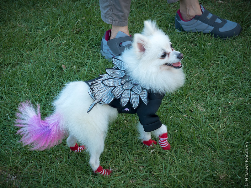 Mardi gras dog!