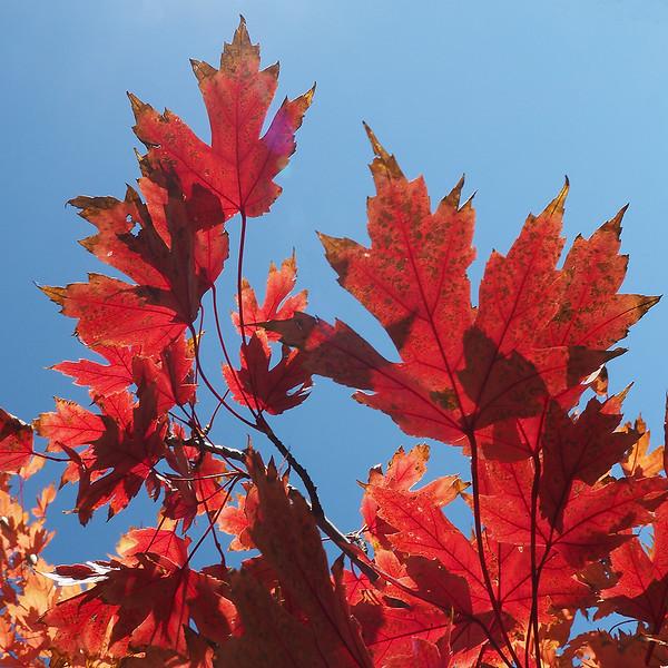 AS Autumn