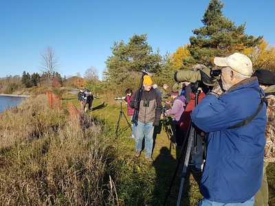WBFN members bird watching from Lucas Point Park