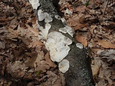 Fungi sp?