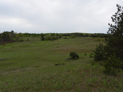 Grasslands at Hazel Bird Nature Reserve