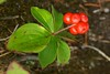 Red Chokeberry (Aronia arbutifolia) I believe