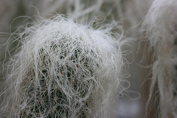 Fuzzy Cactus #2