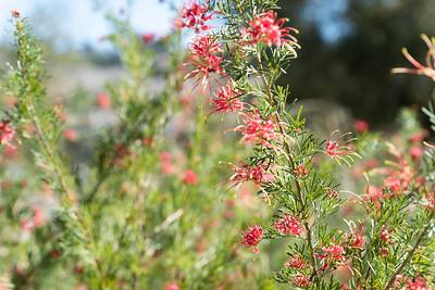 Niguel Botanical Preserve