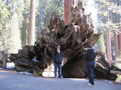 Sequoia (January 2012)