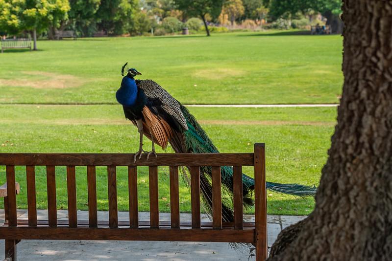 The LA Arboretum