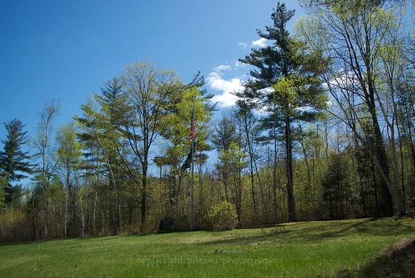 Shelburne Birches
