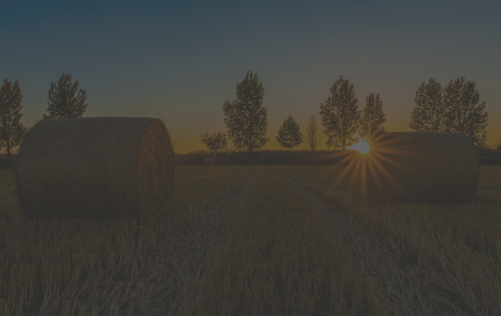 Mondego Fields