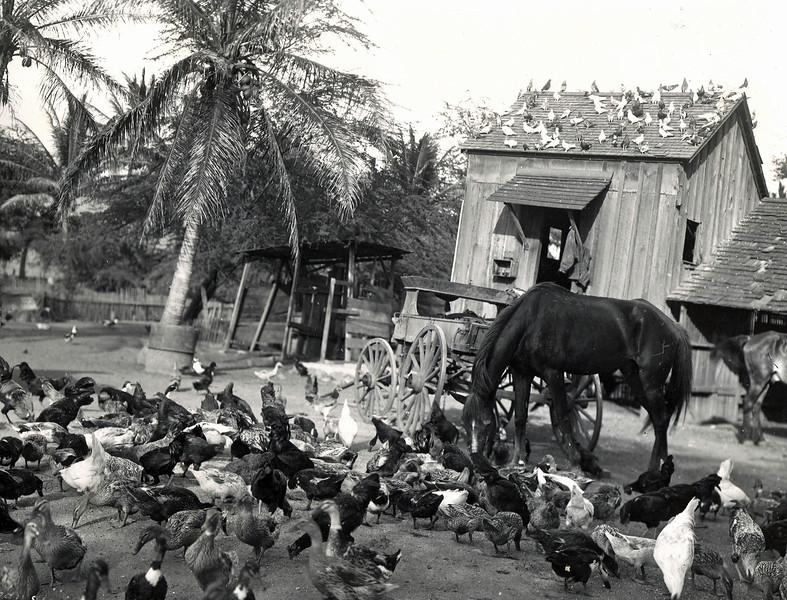 Waikiki Duck Ponds
