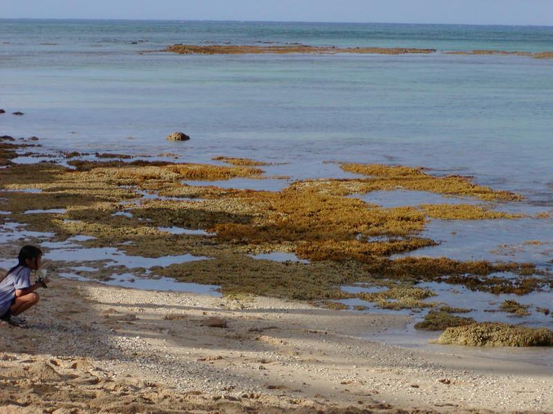 2002 Limu Growing on Reef