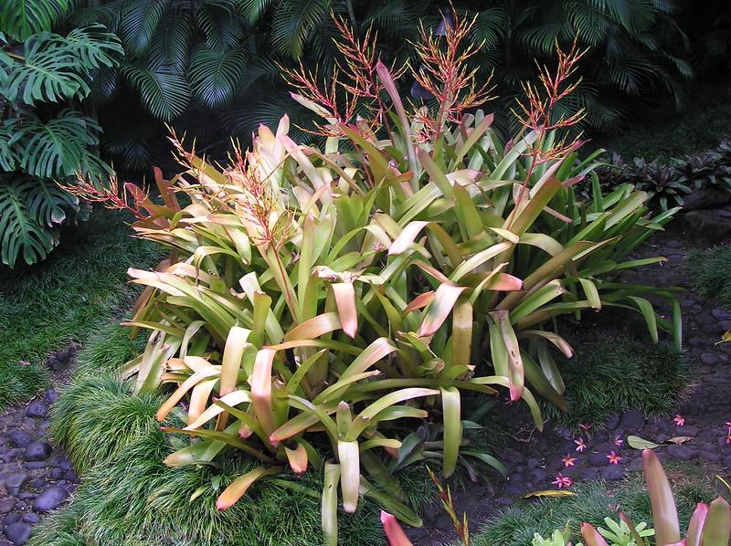 2006 Outrigger Garden