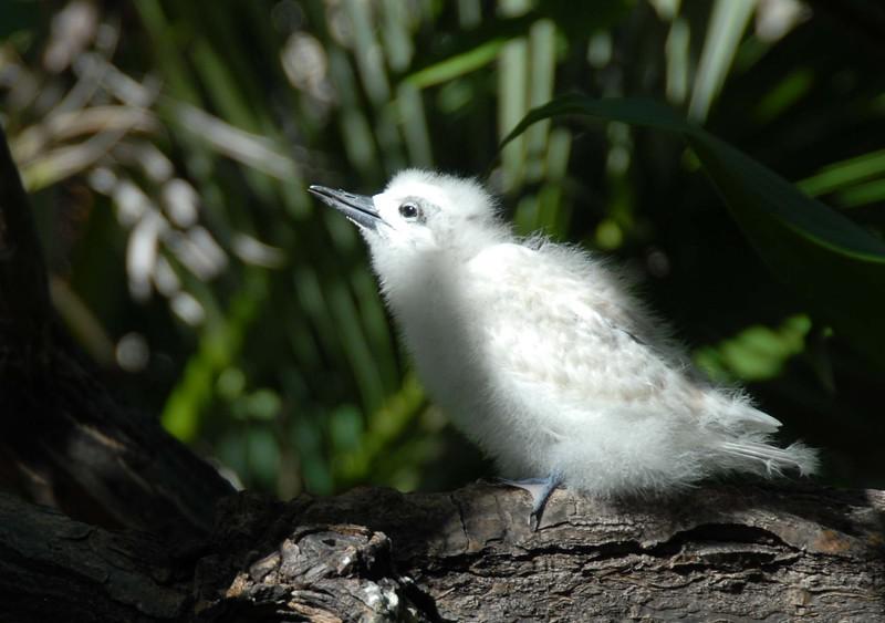 2007 OCC Ferry Tern