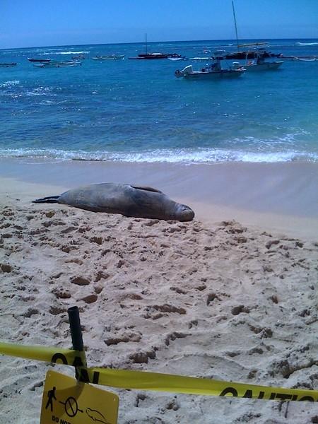 2008 Monk Seal Visit