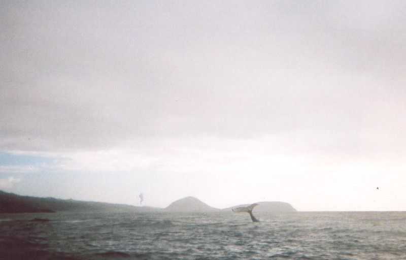2008 Kathy Quinn Ocean Life Photos