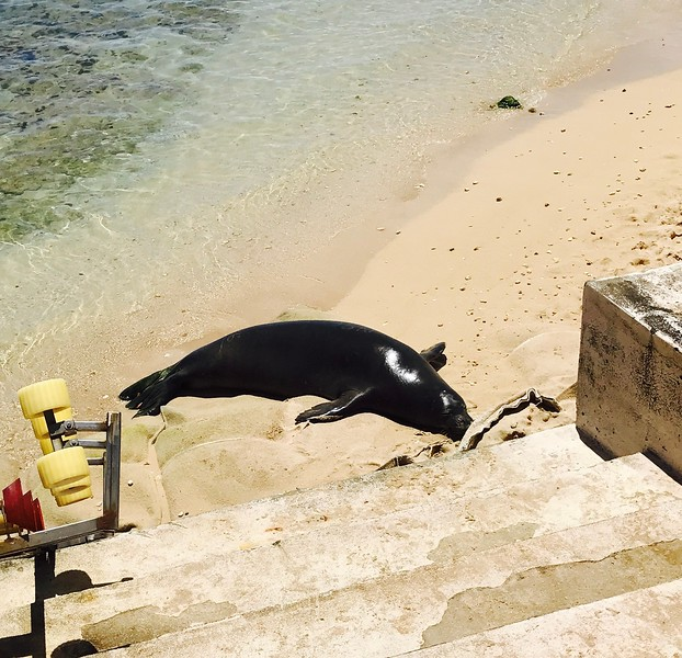 2017 Monk Seal Visitor