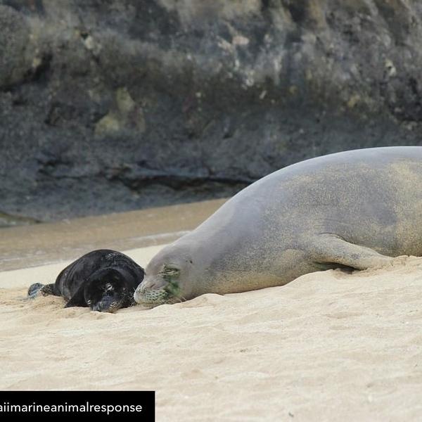 2021 Monk Seals Kaiwi and Loli'i