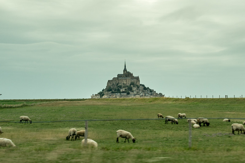 Well, we could find the sheep and le Mont while driving....
