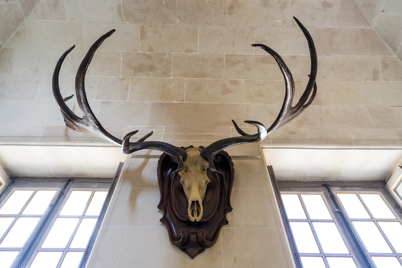 Antlers are over 6000 years old from the cervus megaceros (ancestor of the elk), found in the Siberian ice fields around 200 years ago. They are hung at the actual height of the animal.